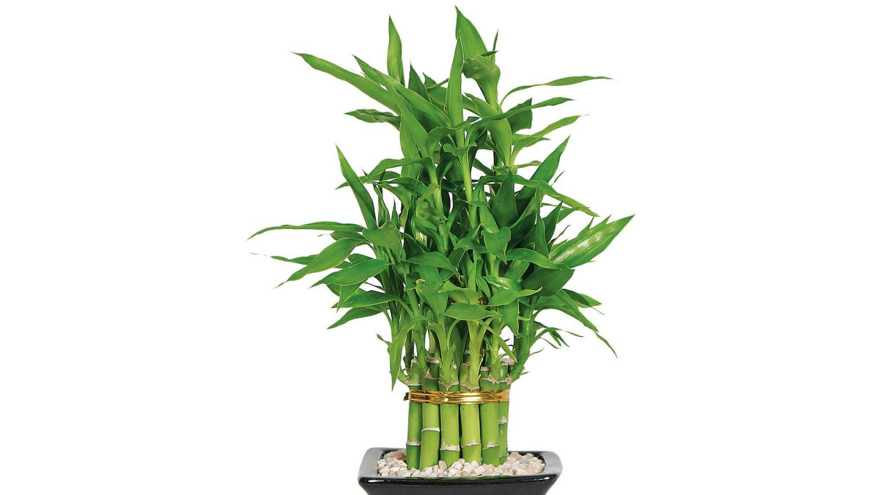 Bambu sticks feng shui products